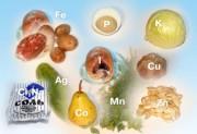 doc_vitamins4